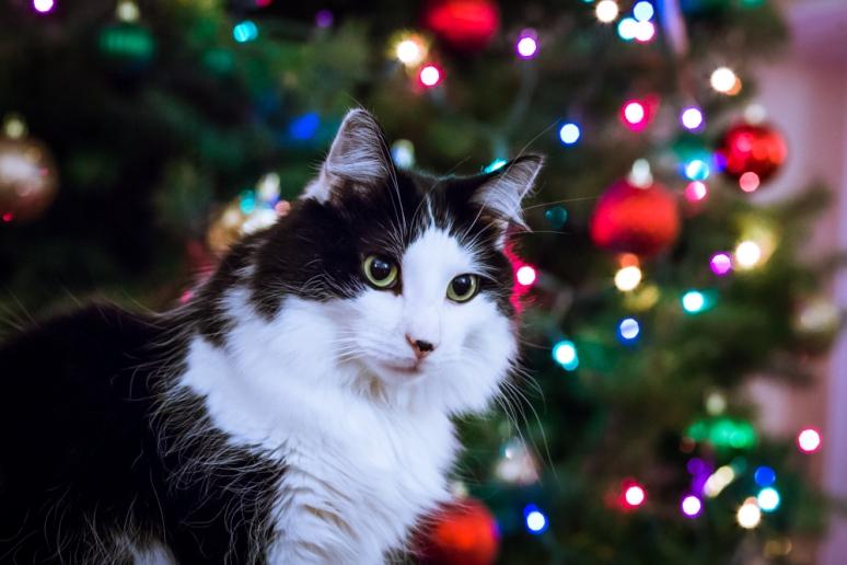 Christmas2014-5